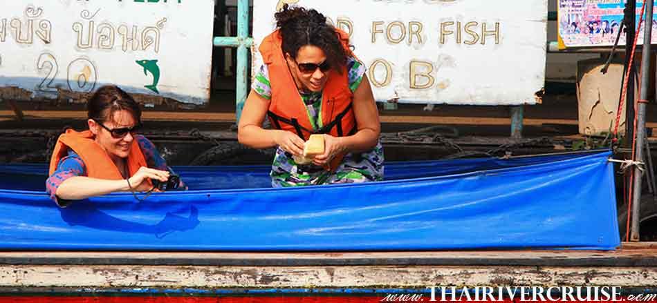 เช่าเรือหางยาว เจ้าพระยา นักท่องเที่ยว ต่างชาติ ให้ขนมปัง อาหารปลา ริมคลองบางกอกน้อย  ท่องเที่ยว กับ เรือหางยาว แม่น้ำเจ้าพระยา จะนำพาท่าน ล่องเรือ หางยาว ชมทัศนียภาพ อันสวยงาม ของ แม่น้ำเจ้าพระยา พร้อม สัมผัสวีถีชีวิต การเป็นอยู่ ชาวกรุง ใน คลองบางกอกน้อย และ คลอง ต่าง ๆ ฝั่งธนบุรี