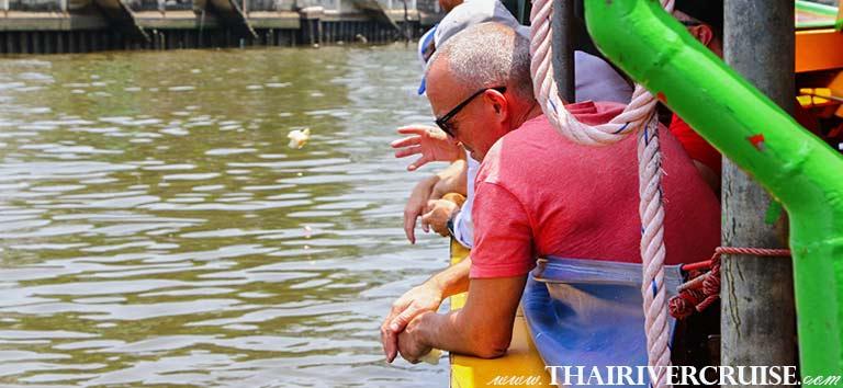 Enjoy to fish feeding in Bangkok Noi Canal, Sunset Boat Tour Bangkok Private Chao Phraya River Bus Boat Tour
