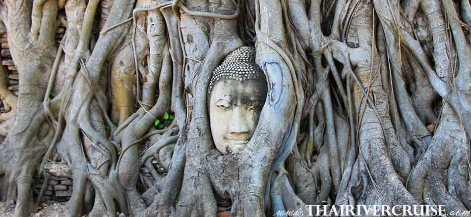 Visit Wat Mahatad Buddha Tree, the royal monastery, served as the residence of supreme monk,White Orchid River Cruise Ayutthaya