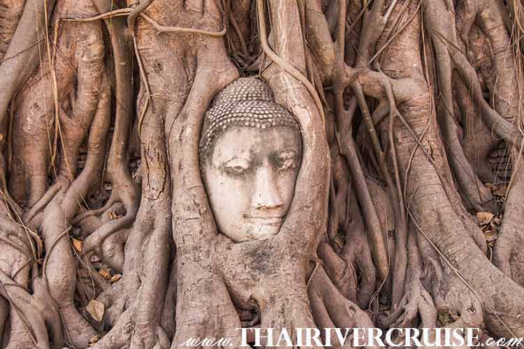 Amazing Wat Mahathat ( Buddha Tree ) Wat Mahathat or Buddha Tree.If you have seen a postcard with a the head of the Buddha in a tree trunk and roots grow around it